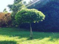 Tanulságos mese a fáról